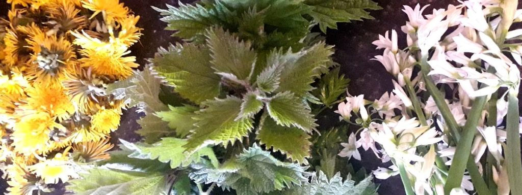 wild-spring-samosa-recipe-ingredients-orchards-near-me