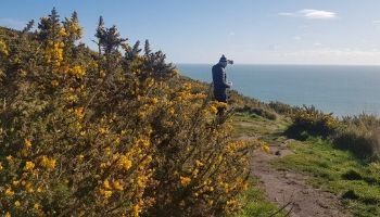 foraging-in-ireland-nature-therapy