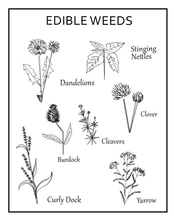 Edible-weeds-print-poster-orchards-near-me-min