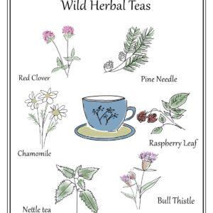 Wild-herbal-teas-poster