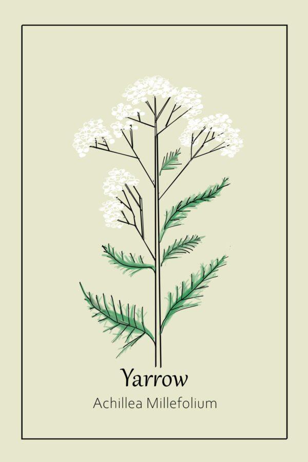 Yarrow-poster