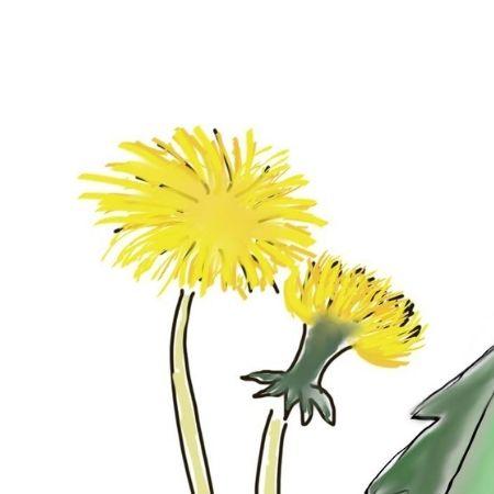 dandelion-heads
